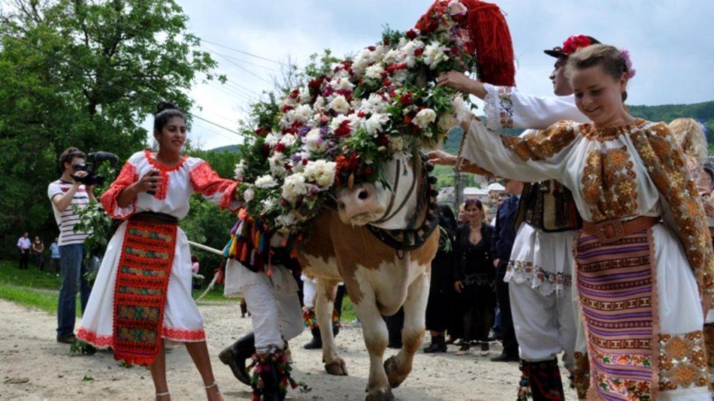 Rusalii - Impanatul boului