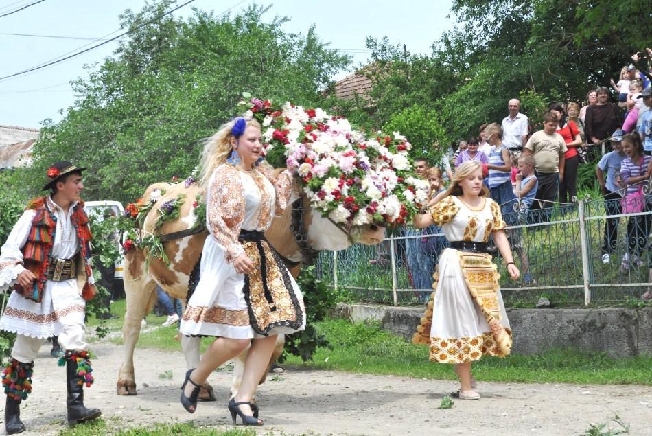 Rusalii - Impaunatul boului